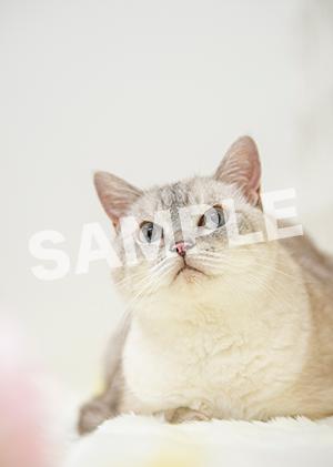 猫とビートルズ__322