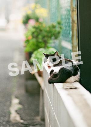 猫とビートルズ__302