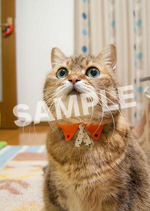 猫とビートルズ__311