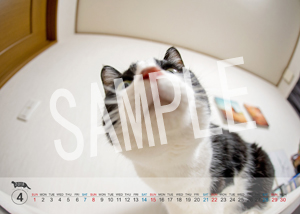 猫とビートルズ__148