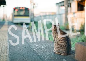 猫とビートルズ__231