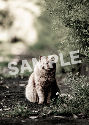 猫とビートルズ__421