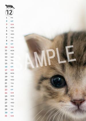 猫とビートルズ__107