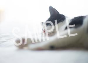 猫とビートルズ__191