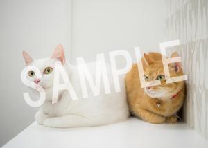 猫とビートルズ__82