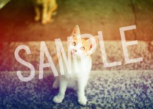猫とビートルズ__221
