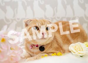 猫とビートルズ__412