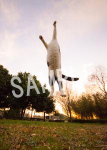 猫とビートルズ__95