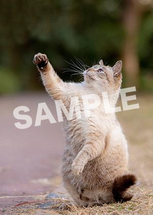 猫とビートルズ__414