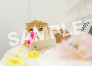 猫とビートルズ__332