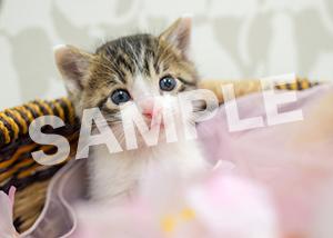 猫とビートルズ__291