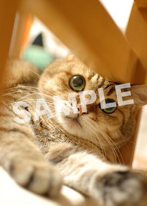 猫とビートルズ__312