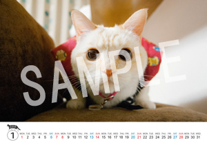 猫とビートルズ__116