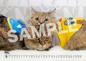 猫とビートルズ__416