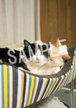 猫とビートルズ__123