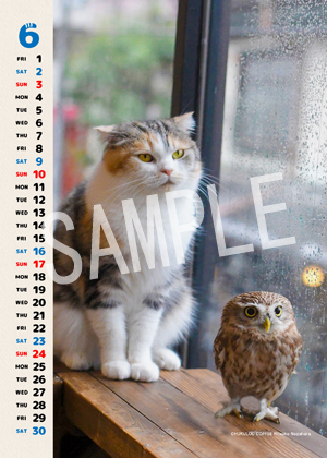 ネコとフクロウ__008