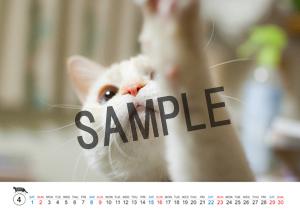 猫とビートルズ__26