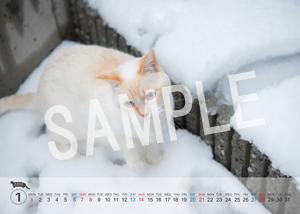 猫とビートルズ__117
