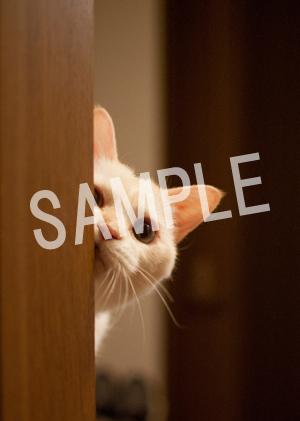 猫とビートルズ__101