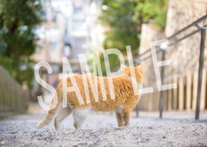 猫とビートルズ__161