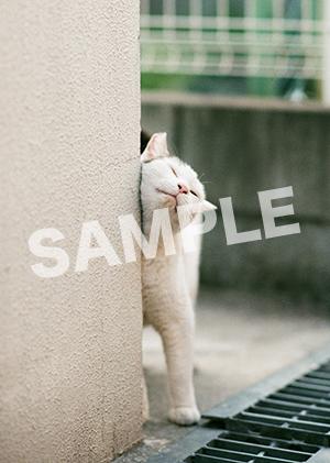 猫とビートルズ__301