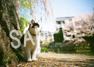 猫とビートルズ__31