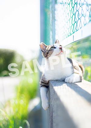猫とビートルズ__422