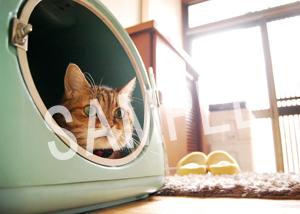 猫とビートルズ__103
