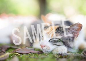 猫とビートルズ__181