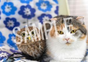 ネコとフクロウ__004