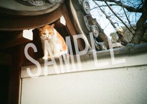 猫とビートルズ__142