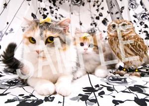 ネコとフクロウ__129