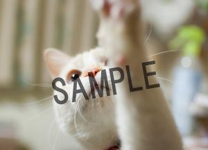 猫とビートルズ__21