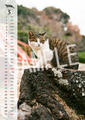 猫とビートルズ__260