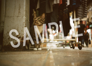 猫とビートルズ__125