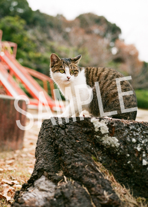 猫とビートルズ__255