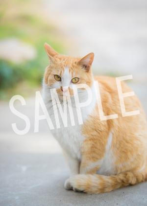 猫とビートルズ__152