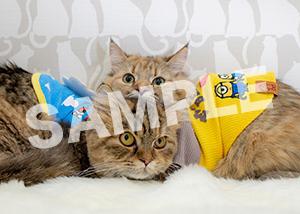猫とビートルズ__411