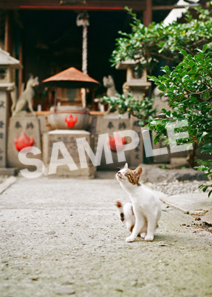 猫とビートルズ__321