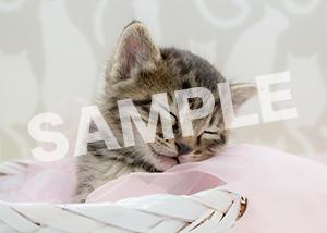 猫とビートルズ__292