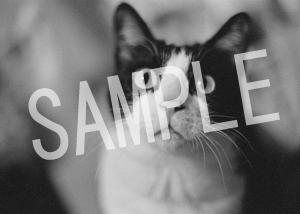 猫とビートルズ__192
