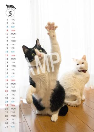 猫とビートルズ__140