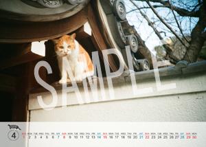 猫とビートルズ__147