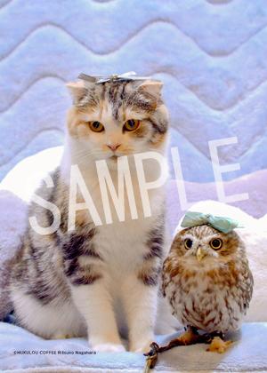 ネコとフクロウ__153