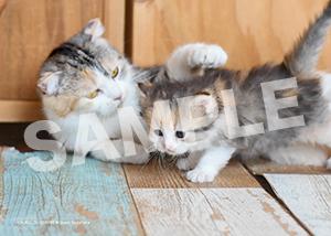 ネコとフクロウ__185