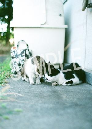 猫とビートルズ__203