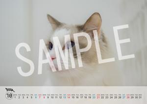 猫とビートルズ__210