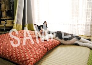猫とビートルズ__63