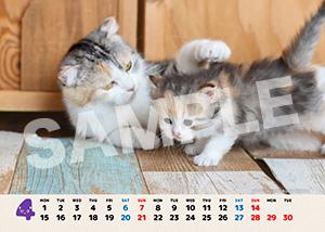 ネコとフクロウ__195