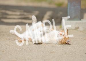 猫とビートルズ__155